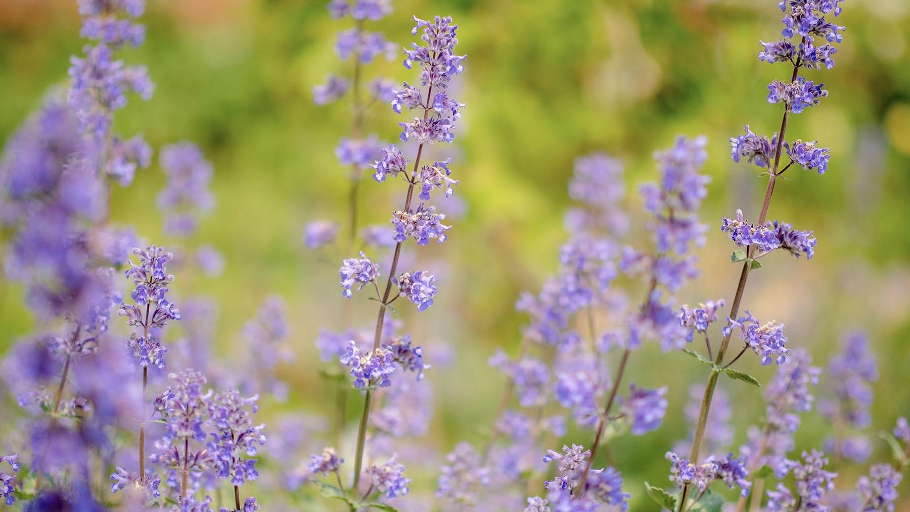 Close-up photo of plants in school garden